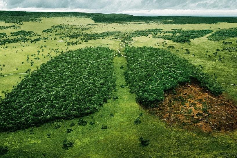 green-lungs-min